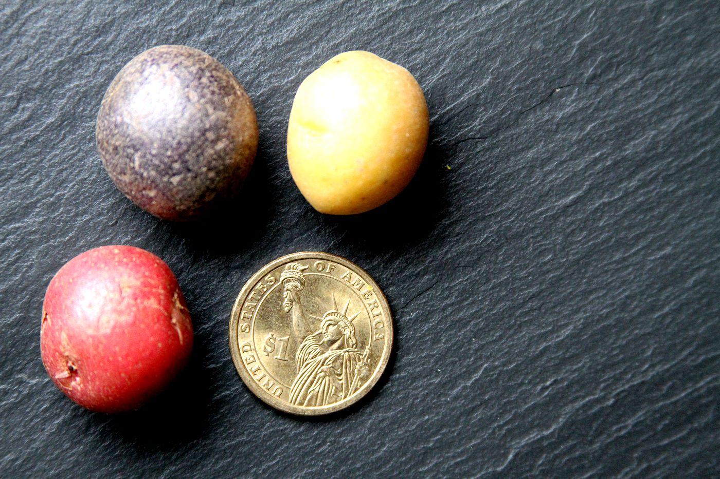Mini-potaoes-medium1